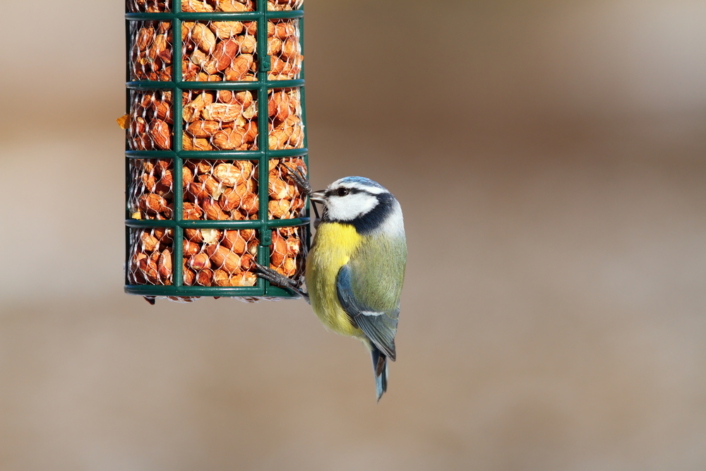 How to make your own bird food